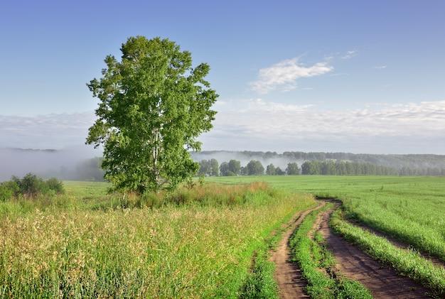 Matin d'été dans le domaine un bouleau sous un ciel bleu une route rurale sur un pré vert