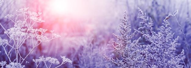 Matin d'hiver dans la forêt au lever du soleil. plantes sèches couvertes de givre dans la forêt dans le brouillard au lever du soleil