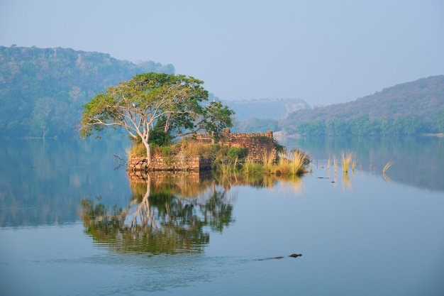 Matin serein sur le lac padma talao. parc national de ranthambore, rajasthan, inde
