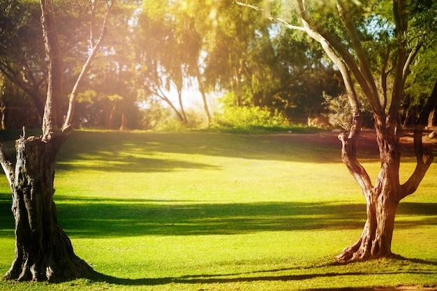 Matin vert rempli de lumière avec de vieux arbres