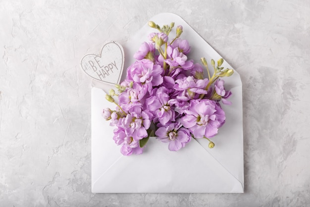 Matthiola lilas fleurs dans l'enveloppe