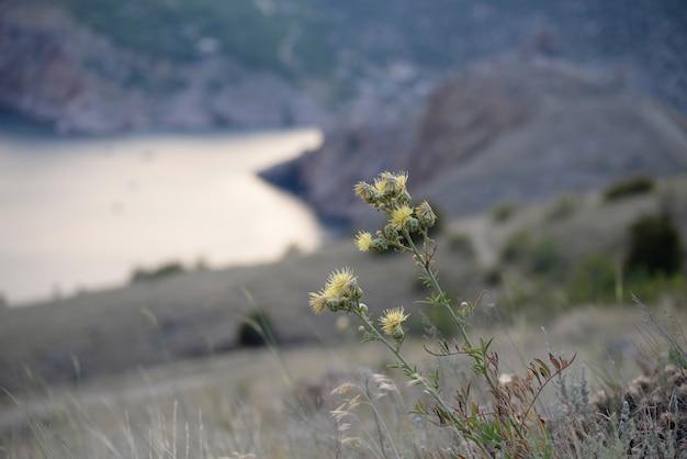La mauvaise herbe pousse sur un rivage rocheux