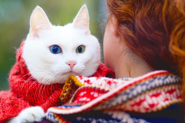 Méconnaissable, une femme tient dans ses bras son adorable chat, une race d'animal angora avec différentes galases. à l'extérieur à l'automne.