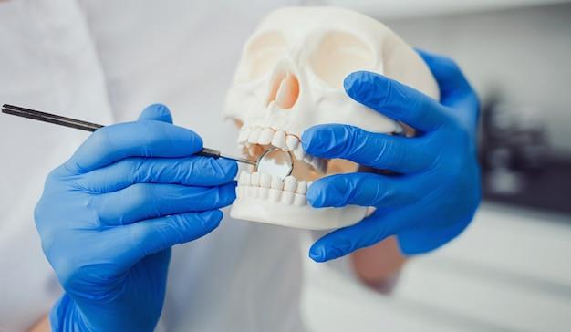 Médecin dentiste avec crâne en cabinet