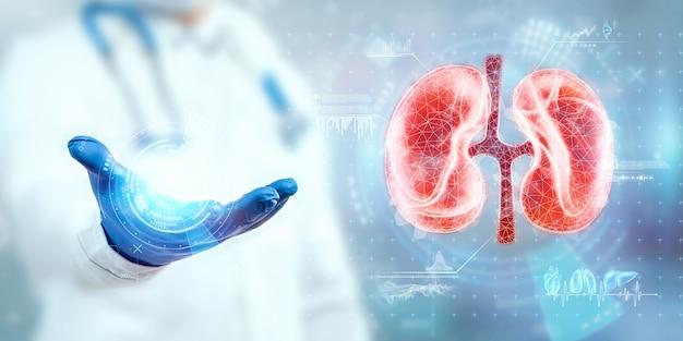 Le médecin examine l'hologramme du rein, vérifie le résultat du test sur l'interface virtuelle et analyse les données. maladie rénale, calculs, technologies innovantes, médecine du futur.