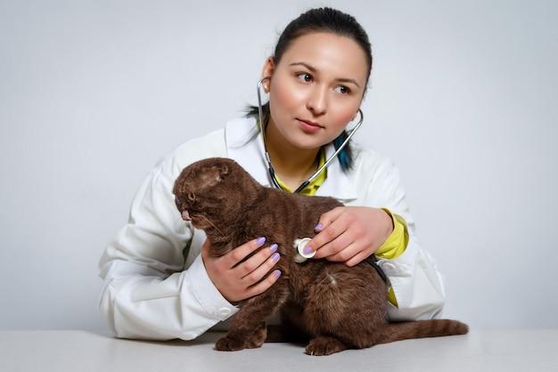 Médecin vétérinaire avec stéthoscope vérifiant le chat à la clinique vétérinaire