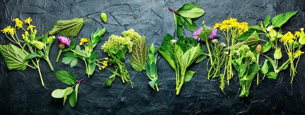 Médecine alternative, ensemble d'herbes médicinales et de fleurs.médecine naturelle et homéopathie.longue bannière