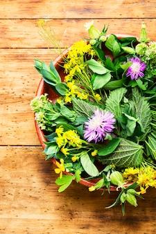 Médecine alternative, ensemble d'herbes médicinales et de fleurs.médecine naturelle et homéopathie