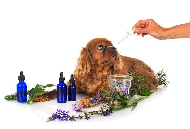Médecine alternative pour chien devant fond blanc