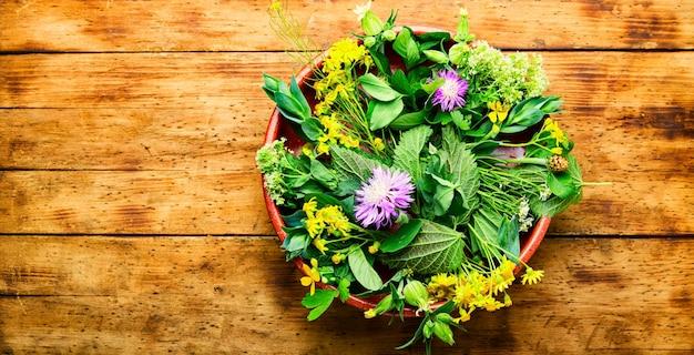 Médecine naturelle, herbes fraîches sur table en bois