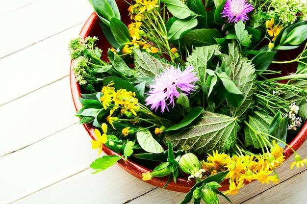 Médecine naturelle, herbes fraîches