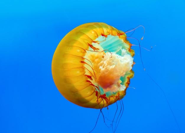 Méduse dansante au fond de la mer