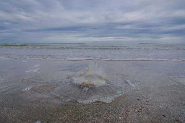 Méduse morte échouée sur la plage.