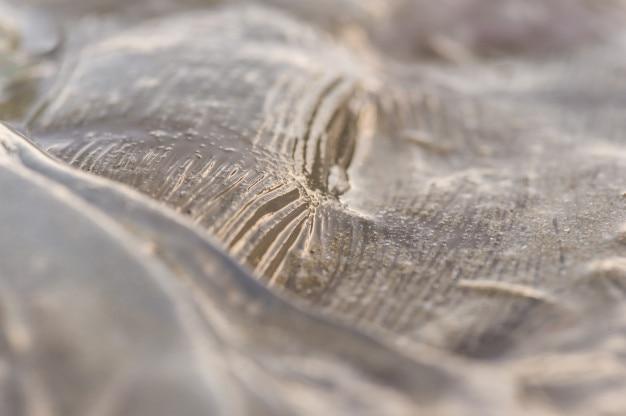 Méduse sur la plage
