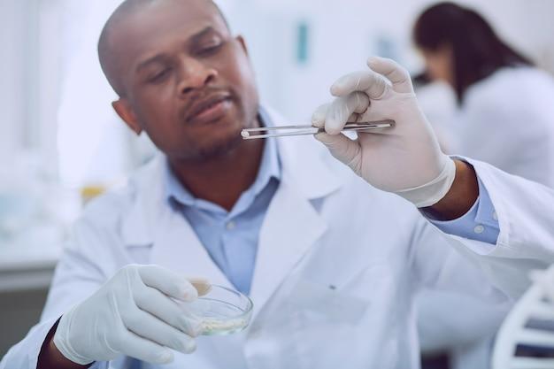 Meilleurs échantillons. biologiste expérimenté déterminé faisant un test avec des graines tout en travaillant dans le laboratoire