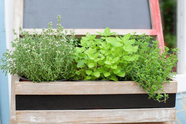 Mélange d'herbes aromatiques fraîches vertes dans des plantes aromatiques de cuisine en pot dans une boîte en bois épices aromatiques poussant dans la maison