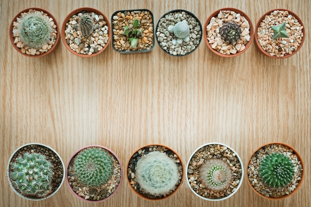 Mélanger cactus sur fond en bois