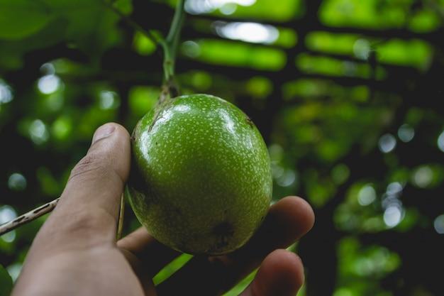 Mélanger un fruit de la passion