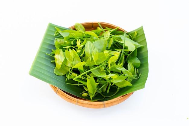 Melientha suavis pierre feuilles sur feuille de bananier dans un panier en bambou