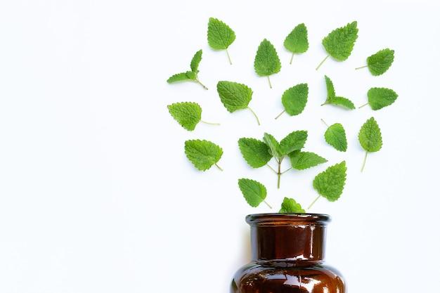 Mélisse mélisse feuilles fraîches avec bouteille d'huile essentielle