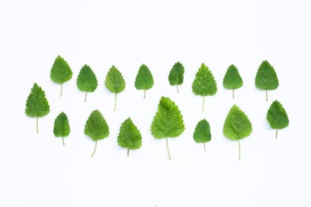 Mélisse mélisse feuilles fraîches sur espace blanc.