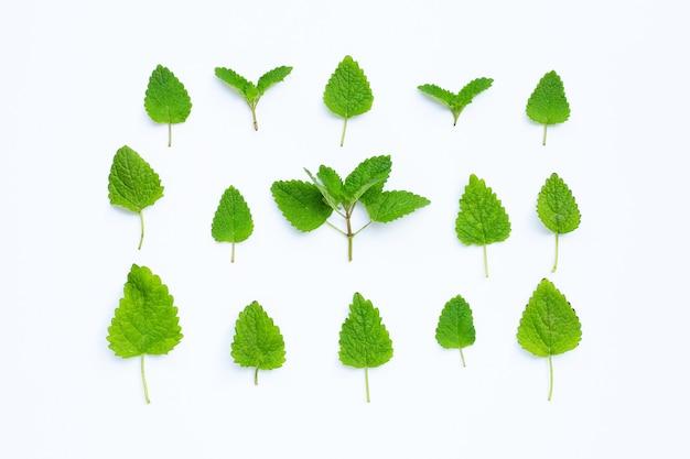 Mélisse mélisse feuilles fraîches