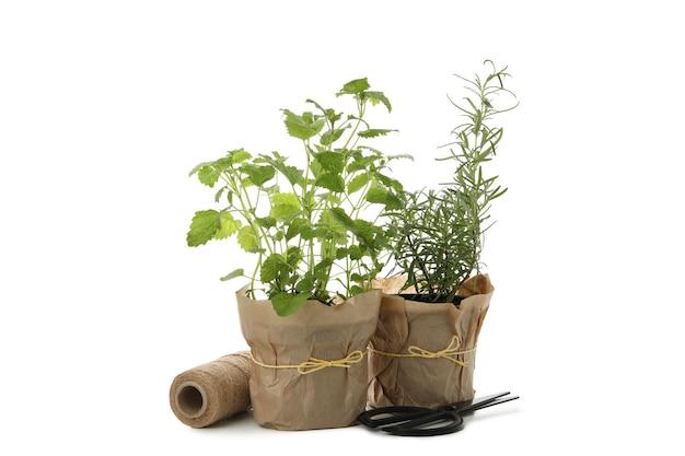 La mélisse et le romarin dans des pots de fleurs isolé sur fond blanc