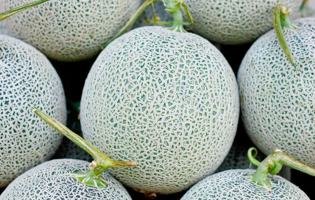 Melon cantaloup gros plan