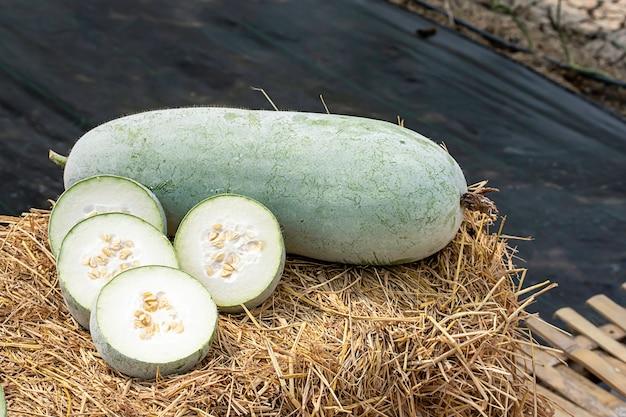 Le melon d'hiver est coupé en morceaux sur la paille.