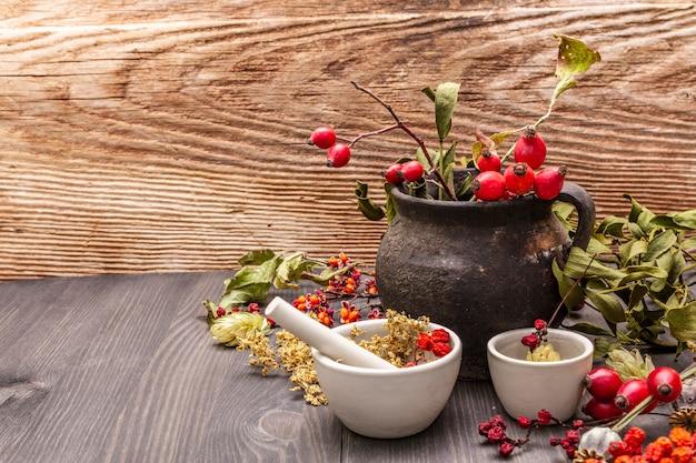 Melon de sorcière, gui, sureau. herbes sèches, fleurs, baies fraîches