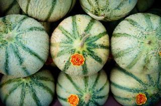 Melons cantaloup