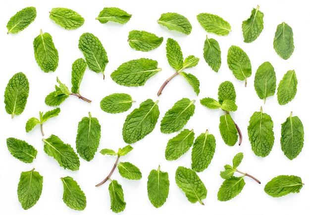 Menthe fraîche isolée sur le fond blanc.set, feuilles