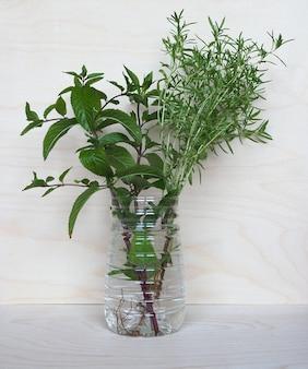 Menthe poivrée (mentha piperita) et plante sarriette d'été (satu