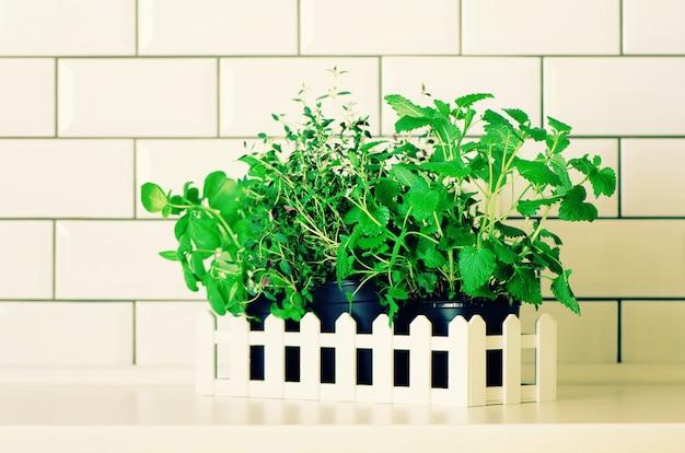 Menthe, thym, basilic, persil - herbes aromatiques bio sur une table de cuisine blanche, fond en brique. plantes d'épices culinaires en pot.