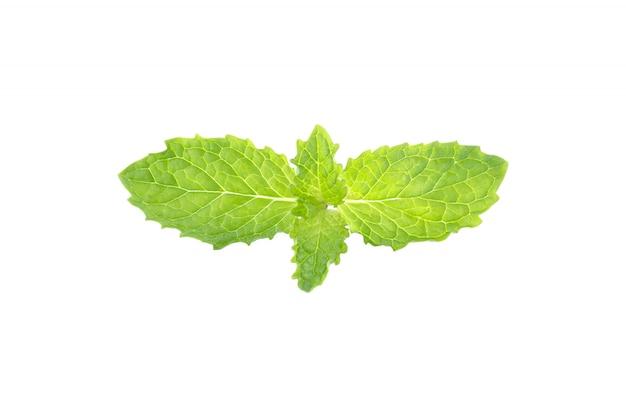 Menthe verte dans un tracé de détourage fond blanc isolé