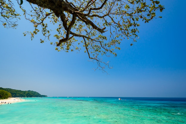Mer et ciel bleu avec plage et branche d'arbre sur l'île de tachai, thaïlande