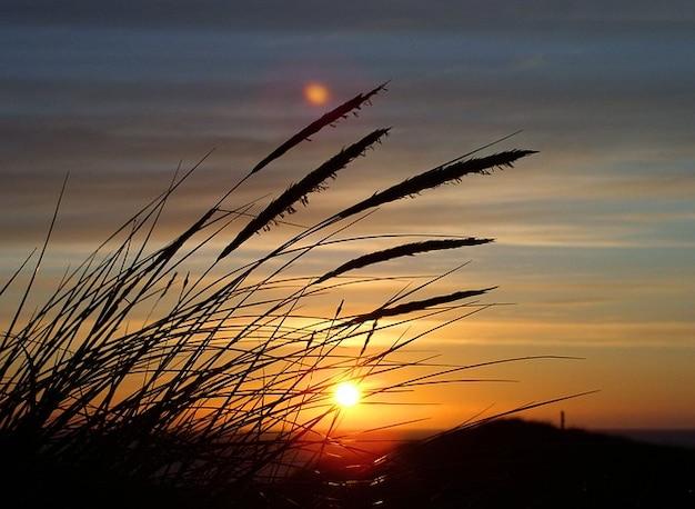 Mer du nord ciel soleil dune herbe danemark