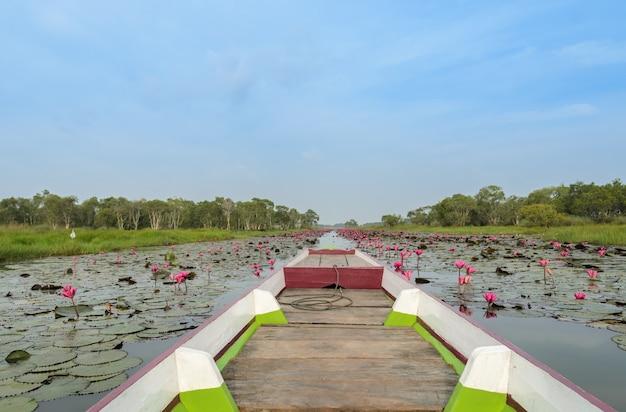 La mer de lotus rouge ou de nénuphar dans la zone humide de talay-noi, en thaïlande