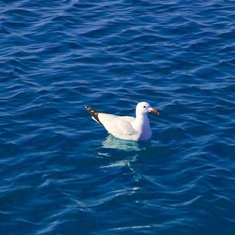 Mer méditerranée bleue avec mouette