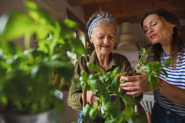 Une mère âgée heureuse avec une fille adulte à l'intérieur à la maison en plantant des herbes