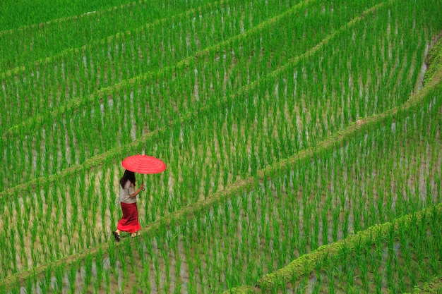 Mère et fils marchant dans les terrasses de riz vert en vacances au village de pa bong paing, mae-jam chiang mai, thaïlande