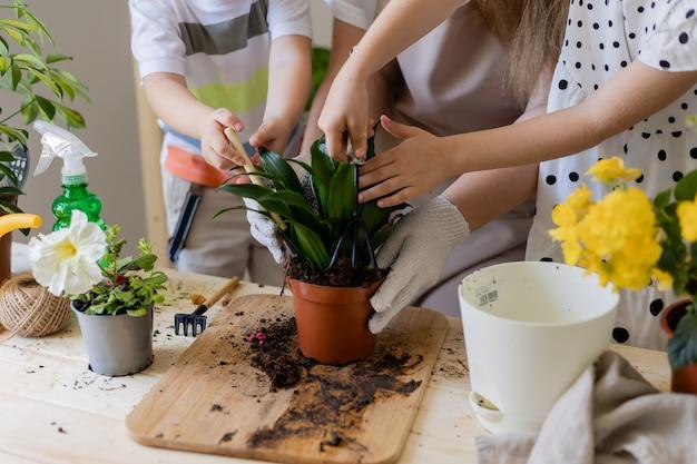 Mère avec hson et fille dans une plante à jeun ou transplanter des fleurs d'intérieur petite aide aux tâches ménagères