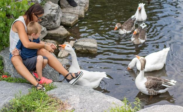 La mère et son enfant nourrissent les oies dans l'étang