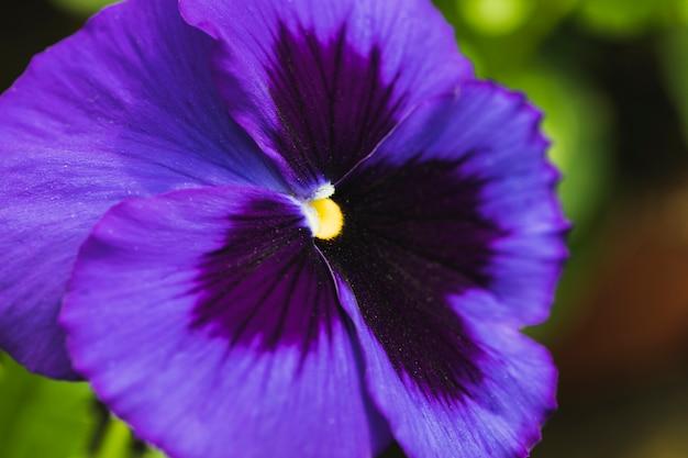 Merveilleuse fleur violette exotique