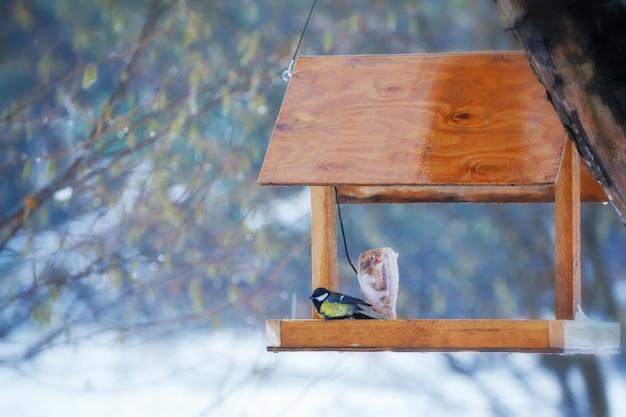 Mésange bleue affamée mangeant de la mangeoire à oiseaux de jardin