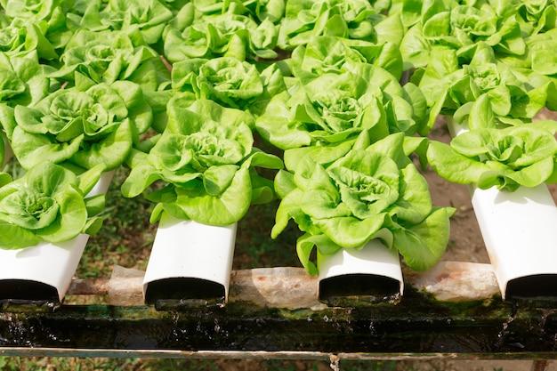 Méthode hydroponique de culture de plantes à l'aide de solutions d'éléments nutritifs minéraux