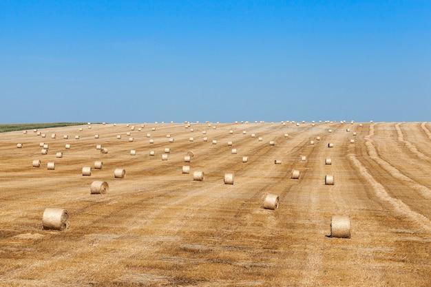 Meules de foin dans un champ de meules de paille paille laissée après la récolte du blé faible profondeur de champ