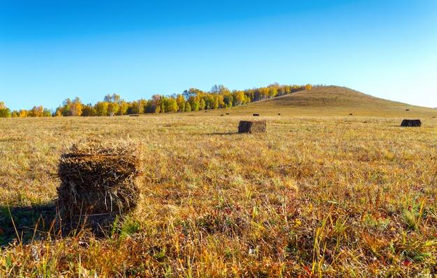 Meules de foin dans les prairies de la mongolie intérieure