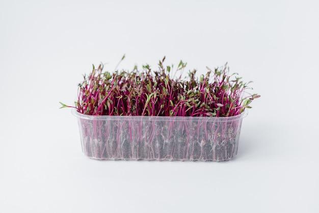 Micro-vert pousses de betterave gros plan sur une surface blanche dans un pot avec de la terre. une alimentation et un mode de vie sains.