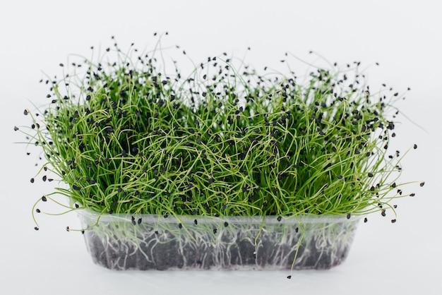 Micro-vert pousses d'oignon gros plan sur une surface blanche dans un pot avec de la terre. une alimentation et un mode de vie sains.